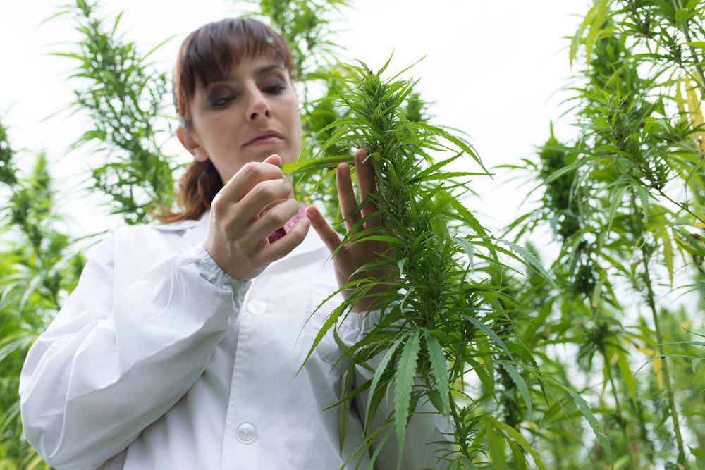 State R&D Tax Credits Can Help Current and Future Growth in the Cannabis Industry