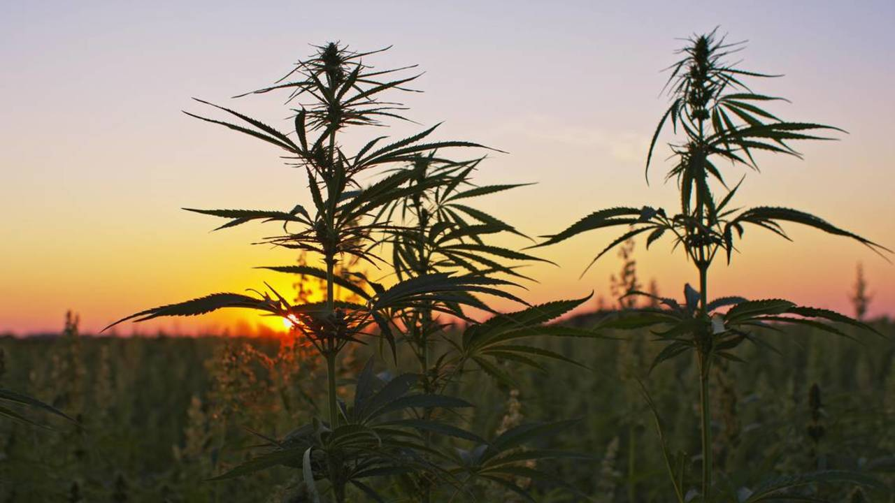 Thanks to the U.S Farm Bill, the Industrial Hemp Industry Can Now Claim The R&D Tax Credit