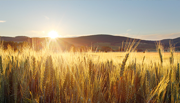 Reinvesting in Agriculture Through R&D Tax Credits